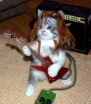 rock star cat
